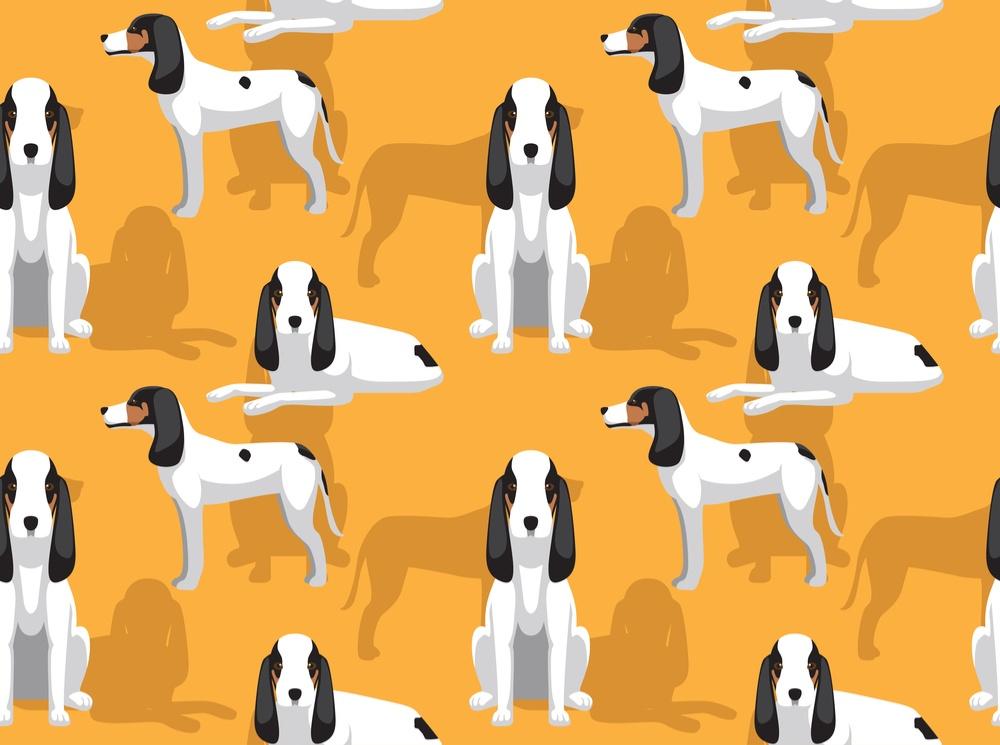 Cão do Ariége cachorro