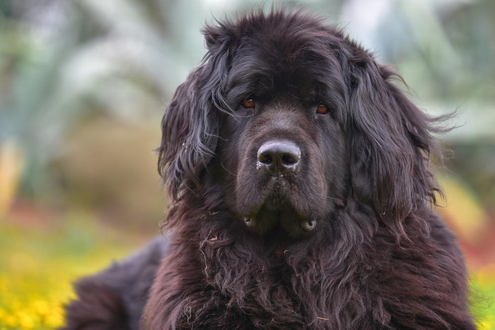 Terra Nova cão